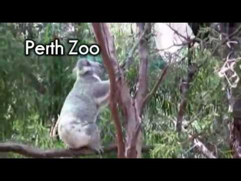 Perth (Australia) Travel Video Guide: Things to see and do