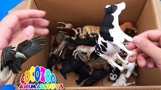 Lots of Animal Wildlife and Farm Animal Learning Colors For Kids With Video Safari #CoCoZoo 002