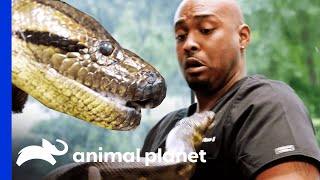 Dr. Ross and an Anaconda Named Annie