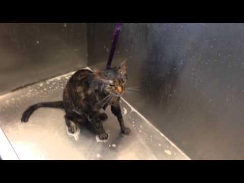 Video viral: el gatito que pide no más baño