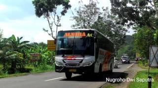 "Download Lagu Klakson telolet bus antar jaya ""almira"" Gratis STAFABAND"