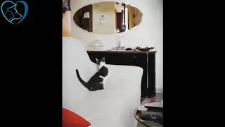 Funny cats🐈 reaction to magic tricks Funny videos compilation videos 🐈 🐈
