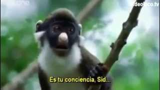 BBC Funny Talking Animals - Walk On The Wild Side (Subtitulado al español)