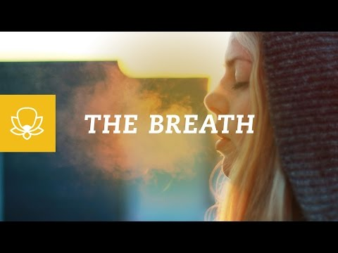 Why Focus On The Breath When You Meditate?