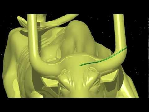 Chaos5   Duhem's bull
