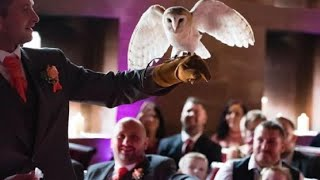 "Image result for Ring-bearing owl pulls ""party fowl"" at wedding, attacks groomsman"