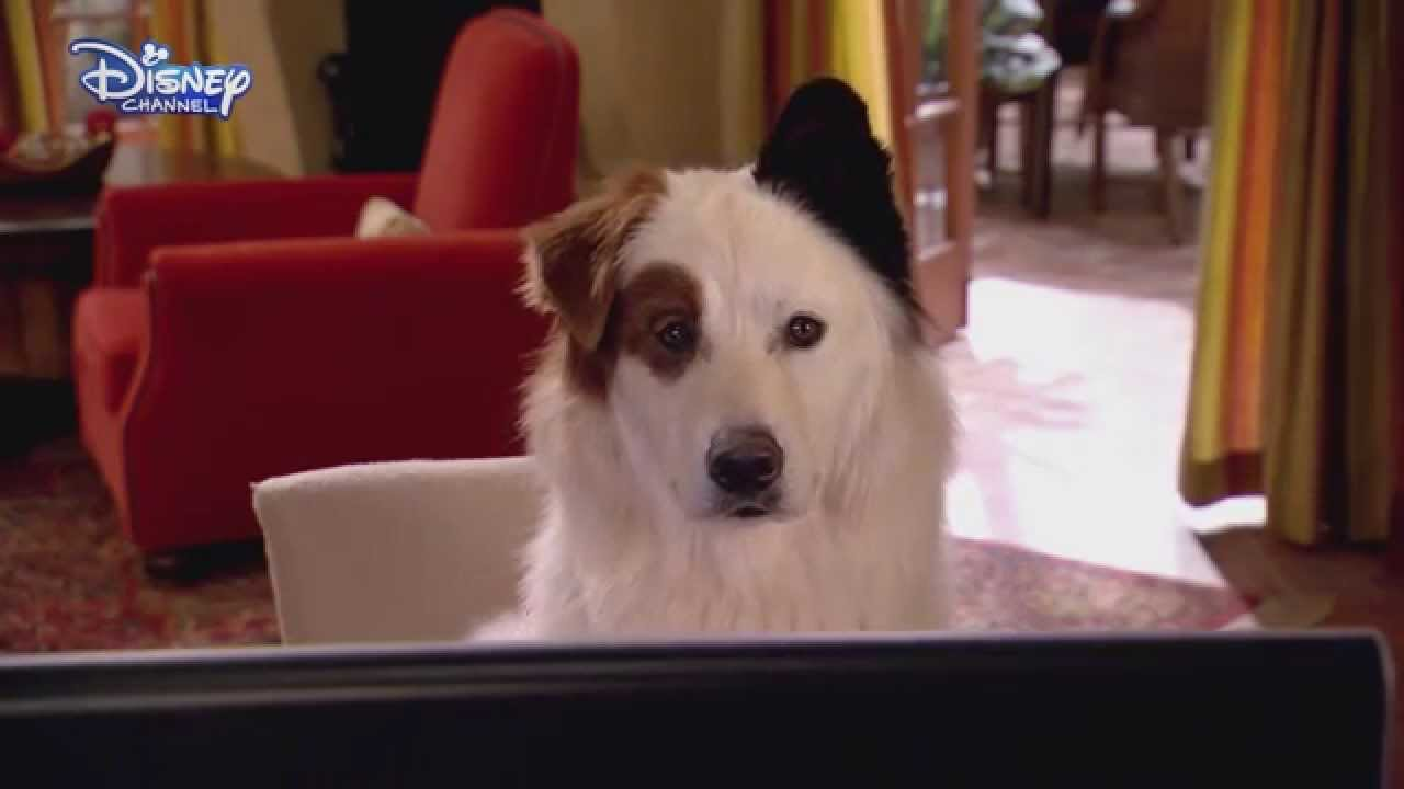 Dog With A Blog - The Kids Find Out Stan Blogs - Stan's ... | 1280 x 720 jpeg 41kB