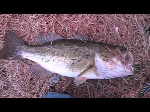 Fishing report - 5lbs 2oz My First Bass For 2011 April 3 (TeamRippnLipz1) Video