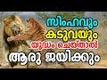 Lion Vs Tiger | Who Will Win | Lion Vs Tiger Fight | Tiger VS Lion   Who Are The Strongest|