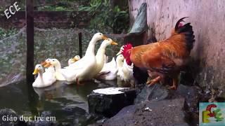 Dạy bé học các con vật nuôi trong nhà   tiếng kêu và hình ảnh động vật sống trong gia đình