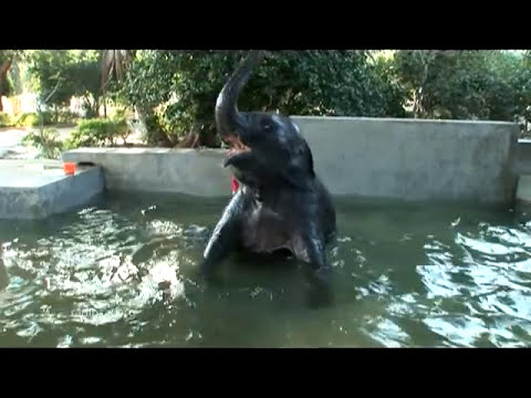 A tribute to SATHYA GEETA - Sathya Sai Baba's pet elephant
