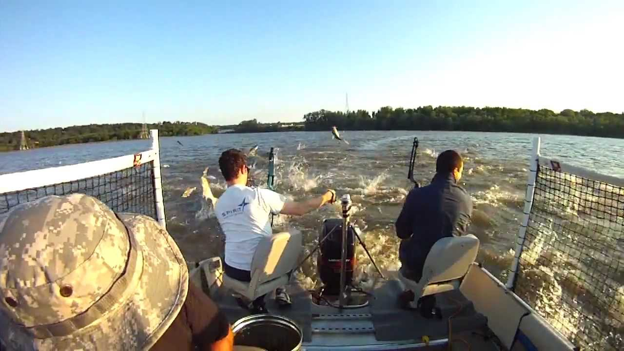 Bowfishing Illinois River Bowfishing Asian Carp Illinois