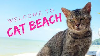 Cat Beach!