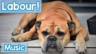 Soothing Music for Dogs in Labour! Relaxing Music to Calm and Soothe Your Dog While They Give Birth!