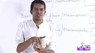 03. Brain Part 01 | ব্রেইন পর্ব ০১ | OnnoRokom Pathshala