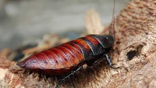 10 Most Intelligent Insects In The World