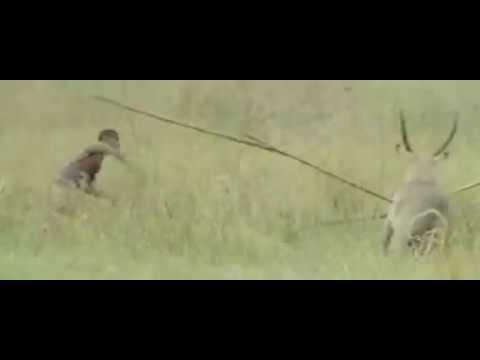 Africa Addio hunting elephants and hippos.avi