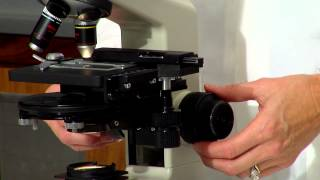 Compund microscope lab demo