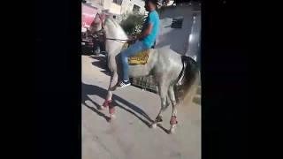 احصان ضياء القطو رعد