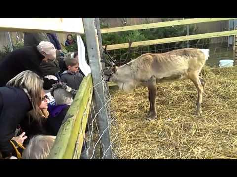 Reindeer at the Garden Centre Part 1