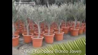 PLANTAS MEDITERRÁNEAS EN ALICANTE