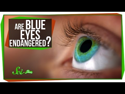 Are Blue Eyes Endangered? video