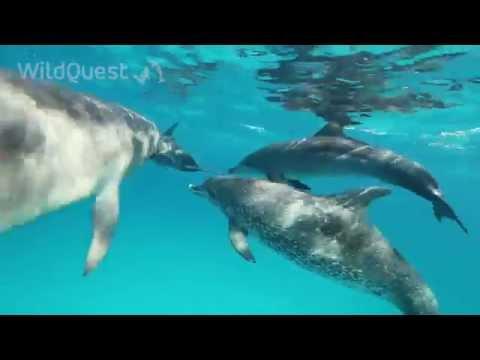 Dolphin Tales 7-2014 - Season finale