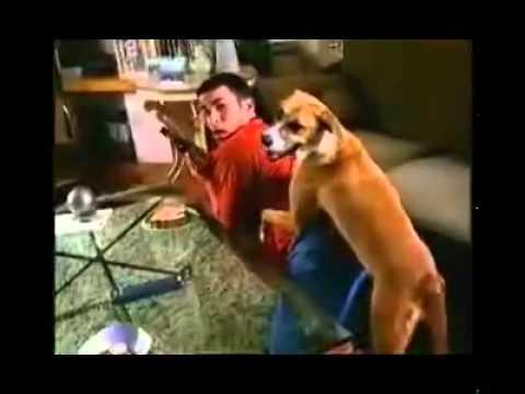 Anjing Rogol Manusia Kisah Benar, Mesti LIHAT !!!