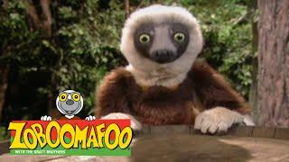 Zoboomafoo 223 - Grow, Zoboo, Grow (Full Episode)