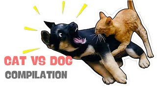 ViviPet | Classic Cats VS Dogs Funny Compilation