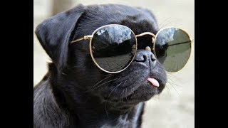 [Funny] Dog Dubs