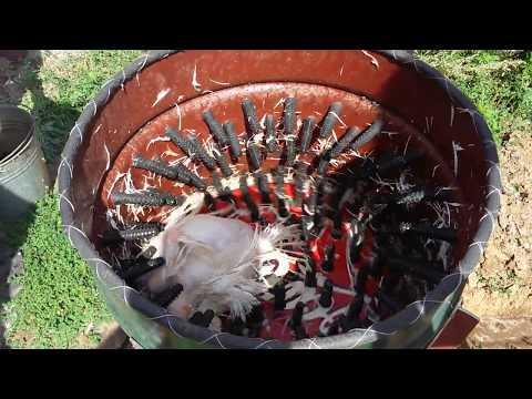 Открытки с курицами прикольные 82