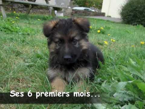 EIKO berger allemand fete ses 6 mois - YouTube