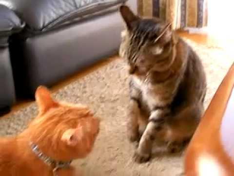 猫バトル Cat battle