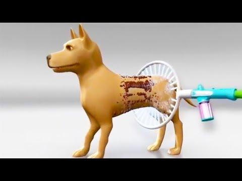10 самых крутых изобретений для СОБАК