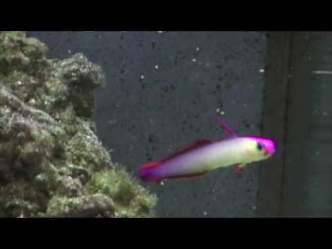 Reef tank first fish day 80 how to save money and do for First fish tank