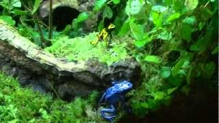 Poison dart frog vivarium