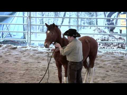 Day 2 - SCEA Rescue Horse - Halter & Lead