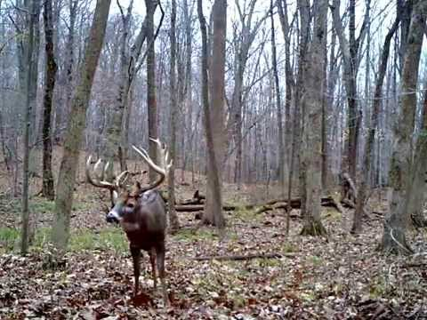 ohio big buck 22 point boone and crockett bushnell 6mp
