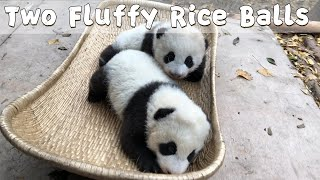 Your Fluffy Rice Balls Are Ready To Ship | iPanda