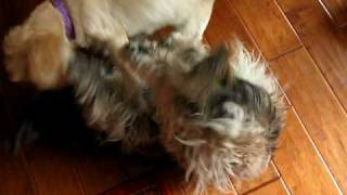 GIRL DOGS GONE WILD!!!!!!!!!!girl dogs gone wild,rescue dogs