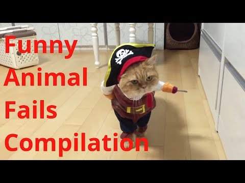 Funny Animal Fails Compilation 😂😂 Cute Funny Dogs, Cats and Pets!