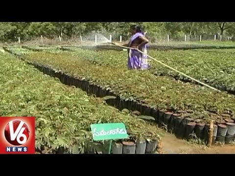 Haritha Haram : GHMC Plans To Bring Awareness In People On Plantation | V6 News