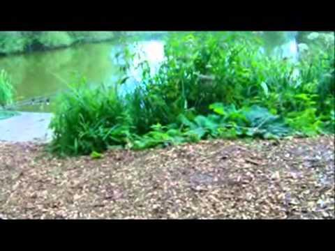 welham lake malton carp fishing 13-8-10 48hrs