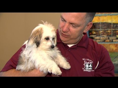 Facebook Post Brings Millbury Family's Stolen Puppy Back Home