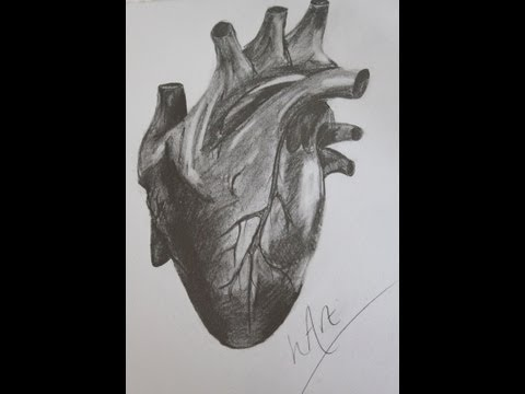 Human Heart   Detailed Graphite Drawing   Art Time Lapse   hArt