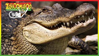 🐊 Zoboomafoo 260 | Crocodilian | Animal shows for kids | Full Episodes | HD 🐊