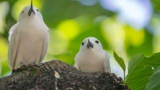 Kara Sun presenting wildlife of the seychelles,Part 3 (Praslin,Aride,Curieuse)