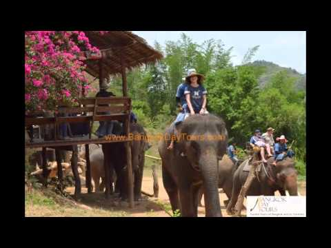 Thailand Elephant and Tiger Temple Tour by Bangkok Day Tours