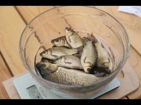Кубок поселка Металлострой по рыбной ловле 2014
